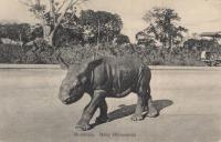 Mombasa. Baby Rhinoceros
