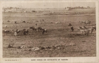 Game Herds on the outskirts of Nairobi