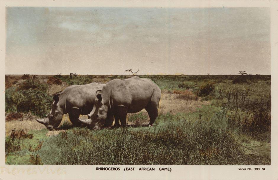 Rhinoceros (East African Game)