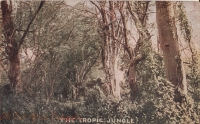 "The tropic Jungle (""Roosevelt Tour"")"