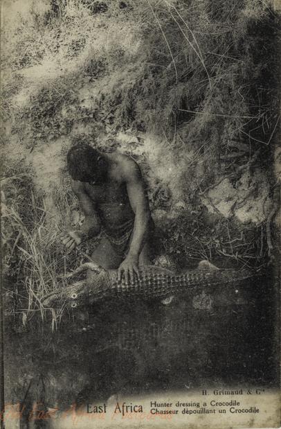 Hunter dressing a Crocodile