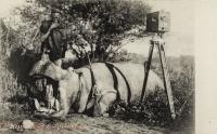 Hippo. B.E.Africa