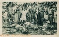 nil (3 lions killed in Mombasa Island, Makupa Rd).