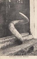 Extraordinary Ivory tusk. Mombasa