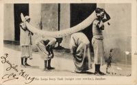 The Large Ivory Tusk (weight over 100 lbs.), Zanzibar