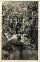East Africa, a hippo
