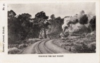 Through the Mau Forest