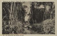 La carovana esce dalla foresta