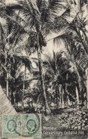 Mombasa. Extraordinary Coconut tree