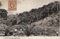 A Forest near Mombasa B.E.A.