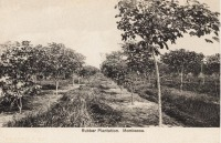 Rubber Plantation. Mombasa
