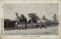 A familiar sight in Mombasa