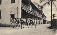 Mombasa. Donkeys carrying building material