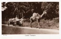 Camel transport
