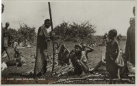 Sugar Cane Sellers, Kenya