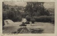 Vegetazione fluviale -