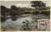 Natural Lily Pond, Tana River