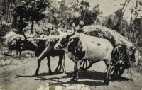 Kikuyu Transport