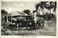 Donkey and Cart. Mombasa