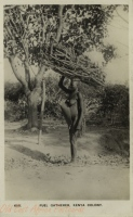 Fuel Gatherer, Kenya Colony