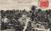 Mombasa. Coconut Farm