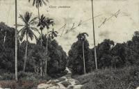 Clove plantation