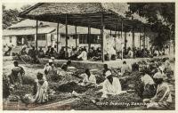 Clove Industry, Zanzibar