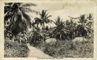 Cocoanut Plantation, Zanzibar