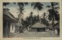 Cocoanut plantation. Zanzibar