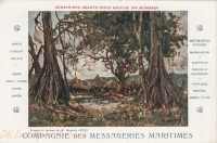 Genévriers géants - Pays Kikuyu (d'après le tableau de Maurice Lévis)