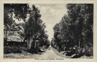 Clove grove at Bububu