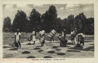 Zanzibar Clove Industry. Drying Cloves