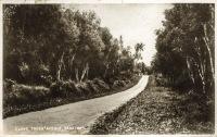 Clove Trees Avenue, Zanzibar
