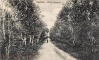 Zanzibar Clove Avenue