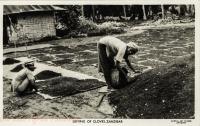 Drying of Cloves