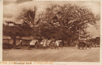 Mombasa View (rickshaws and baobab)