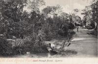 Road through Forest, Uganda