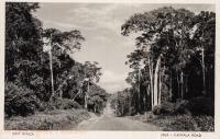 Jinja - Kampala Road
