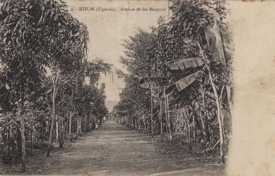 KISUBI (Uganda) Avenue of the Hospital