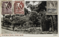 In the Botanic Gardens, Entebbe, Uganda