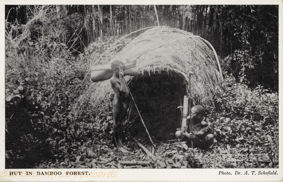 Hut in Bamboo Forest