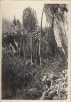 Rwenzori - Leopard's Camp