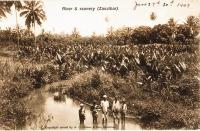 River and scenery (Zanzibar)