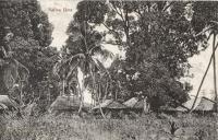 Native huts