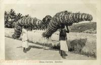 Grass Carriers
