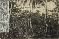 Vanilla Plantation, Dunga, Z bar