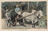 Native Cart. Zanzibar