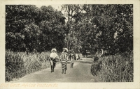 nil (women walking on a road)