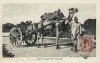 Native Camel Cart, Zanzibar