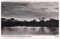 Down on the River Nile near Murchinson Falls, Uganda